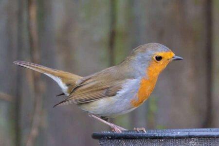 Bird Watching Matters